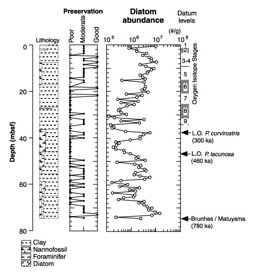 Figure 3  Stratigraphic variations in the abundance and