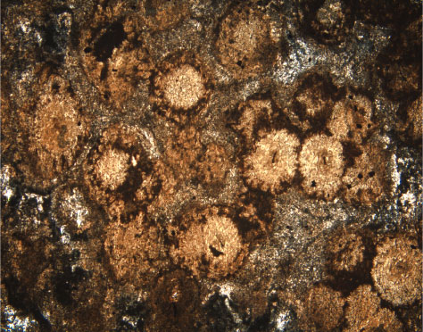 Figure F61 Photomicrograph Of An Apparently Spherulitic